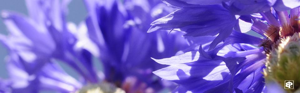 Auteur Photographe fleurs macro
